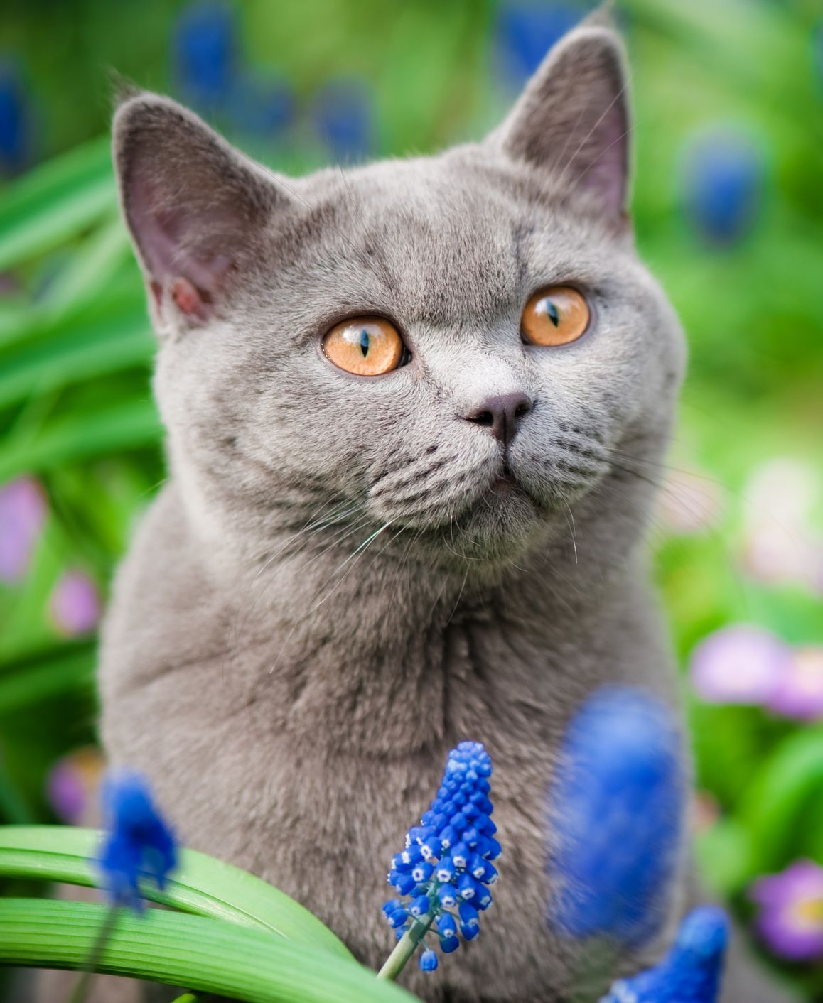 Benadryl For Cats Uses Dosage Side Effects In 2020 Benadryl For Cats Cats Cat Facts
