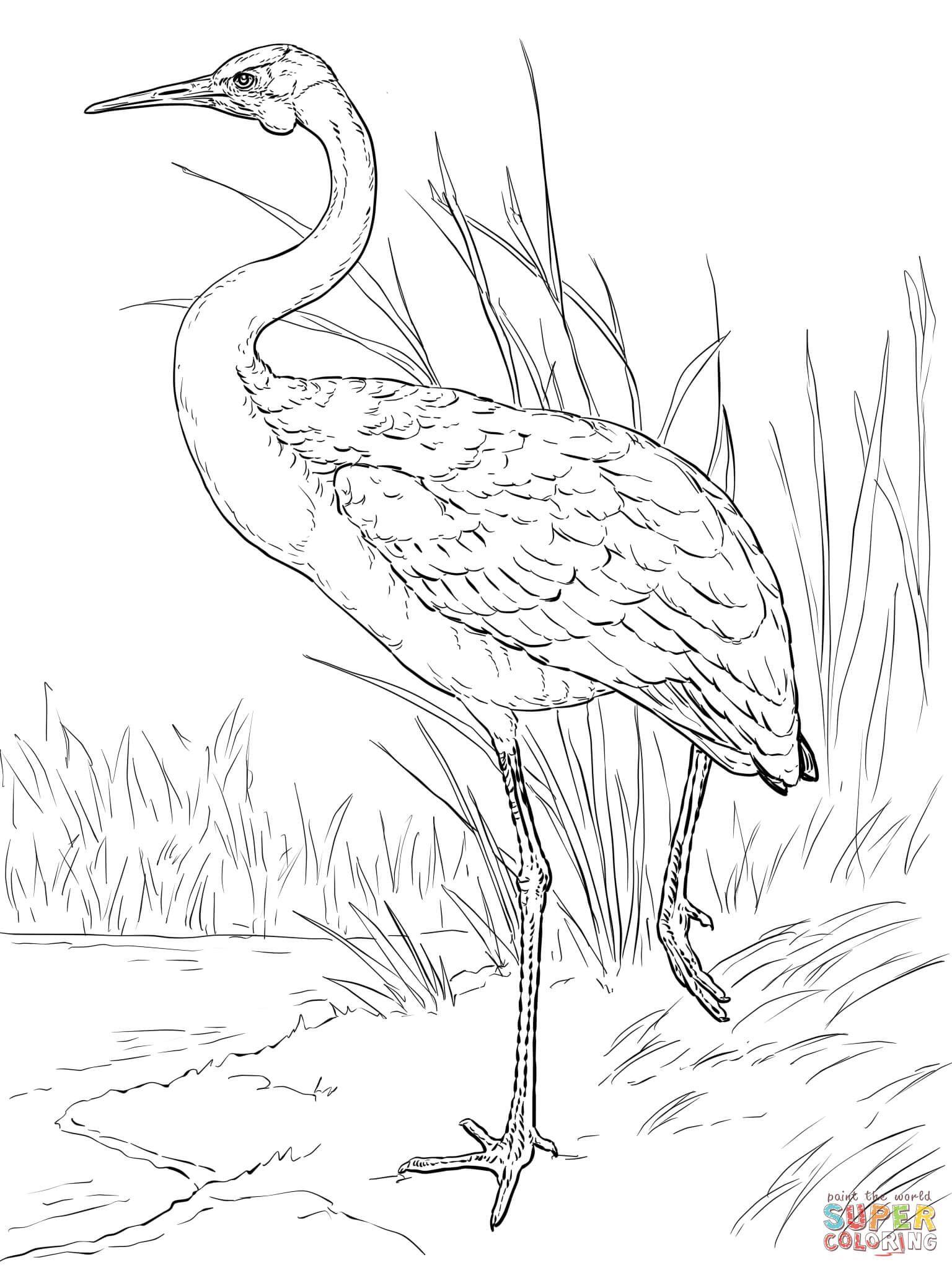 australianbrolgacoloringpage 1536×2048  vogel