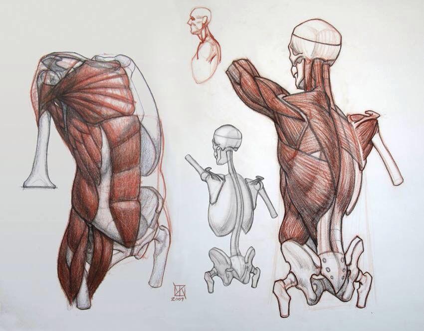 Pin de Marcelo Amp en Anatomy 4 Sculptors | Pinterest | Anatomía