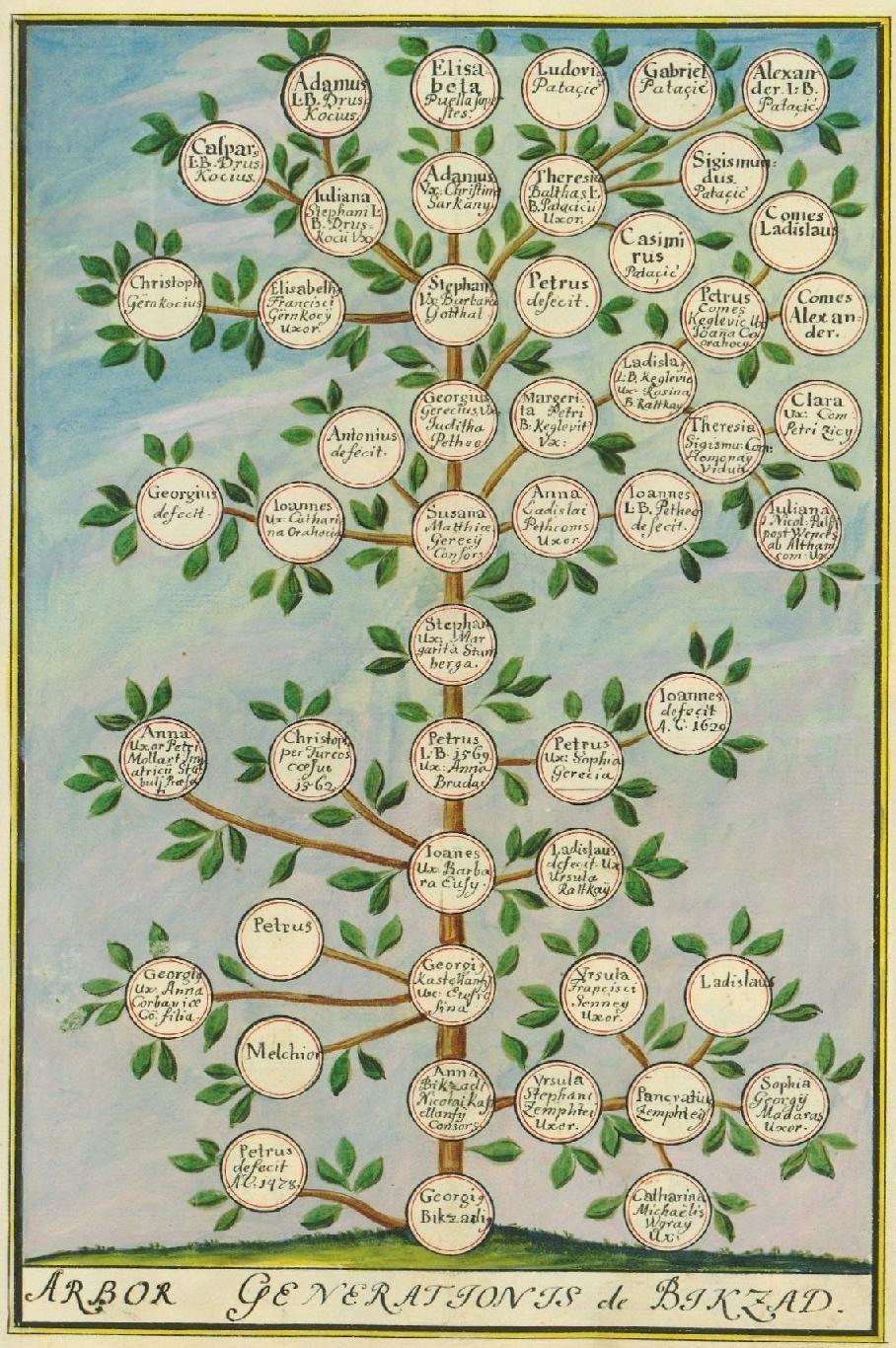 Aleksandar Patacic Patachich 1740 Status Familiae Patachich Sive Notitia Illius Universalis Honorifica Aeque Ac Utilis E Prints Family Tree Illustration