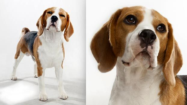 My Dog Is Part Beagle And Looks A Little Like This Too Cute