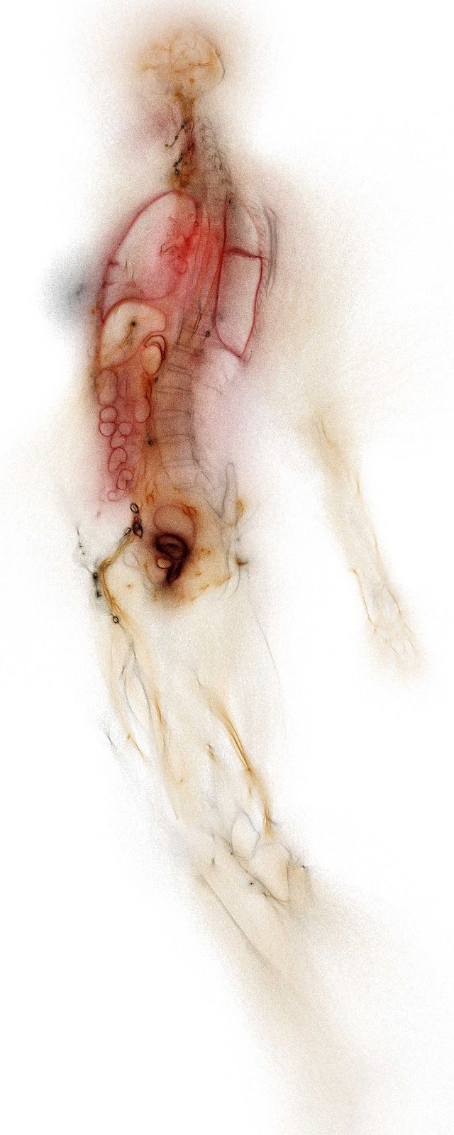 Pin de Katherine Victoria en Colour   Pinterest   Anatomía, Cuerpo y ...