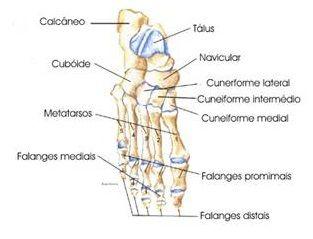 O Sistema Esqueletico Humano E O Composto De Ossos E Cartilagens