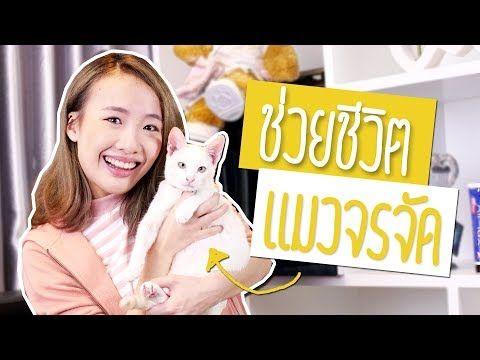 ช วยล กแมวจรจ ด ท เก อบโดนรถชน Youtube ในป 2021