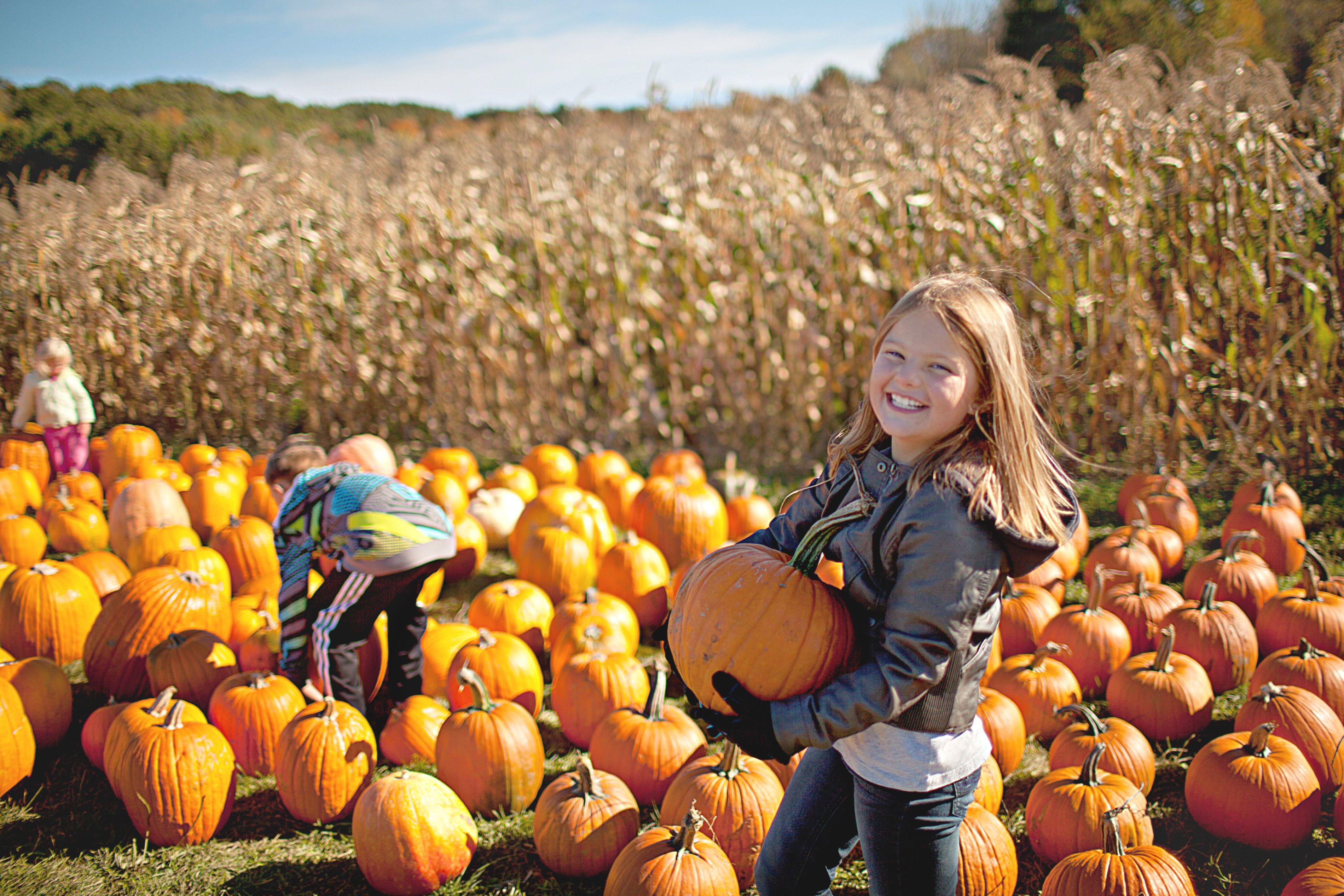 10 Pumpkin Picking Spots Around Boston Pumpkin, Pumpkin