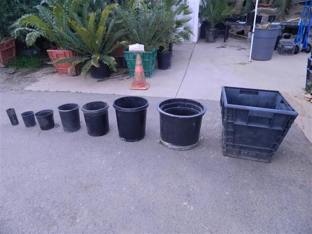 Standard West Coast Pot Size Is In Gallons East Nurseries Describe Containers Inches