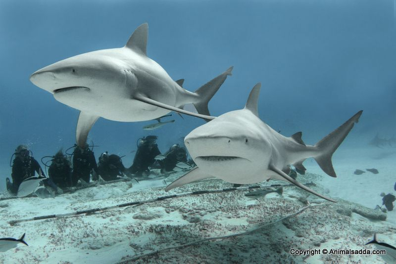 Five Top Shark Charities