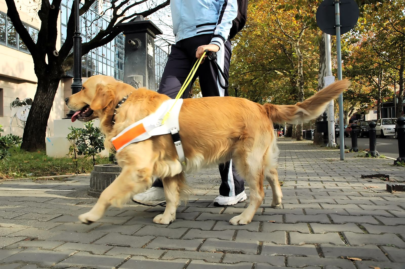 5 Dogs With Amazing Jobs You Won T Believe Are Real Dogs
