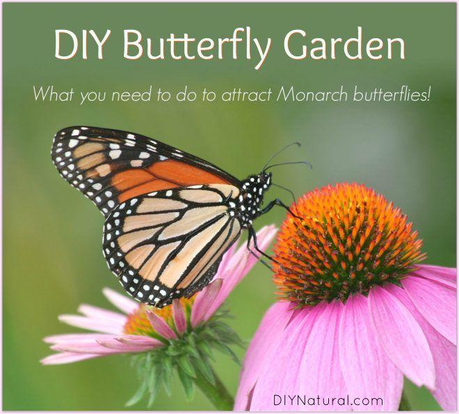 Diy Butterfly Garden Attract Monarch Butterflies To Your 400 x 300