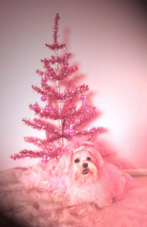 Kitten Kay Sera Pink Dog Kitten Pink Christmas