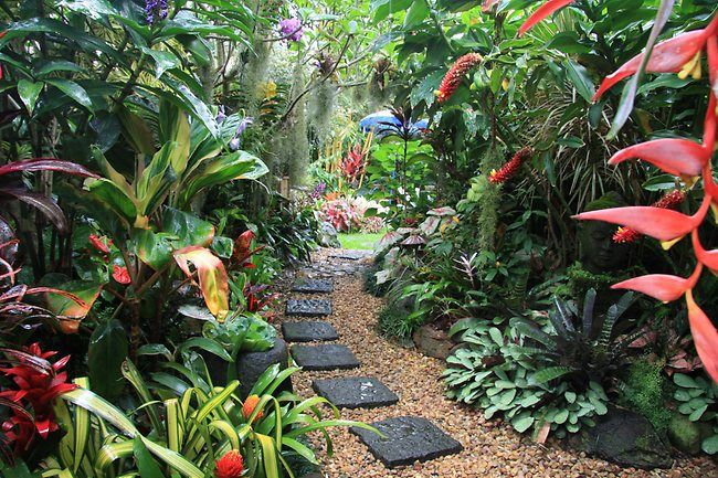 create a tropical garden landscape design tropical balinese garden ideas tips photos inspire your tropical landscaping - Garden Ideas Brisbane