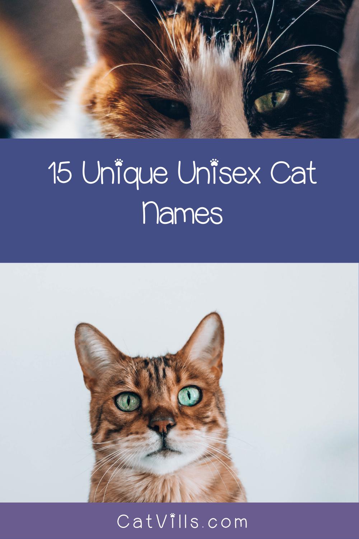 15 Unique & Adorable Unisex Cat Names CatVills in 2020