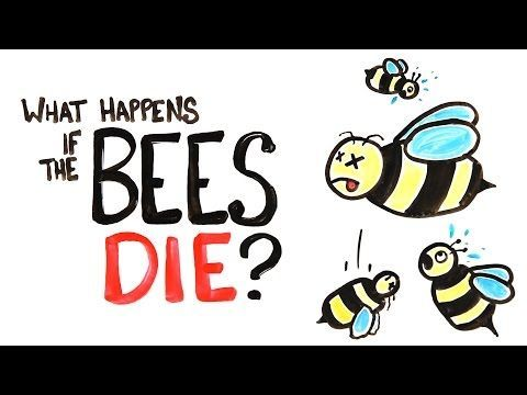 Video If All The Bees In The World Die What Would Happen To