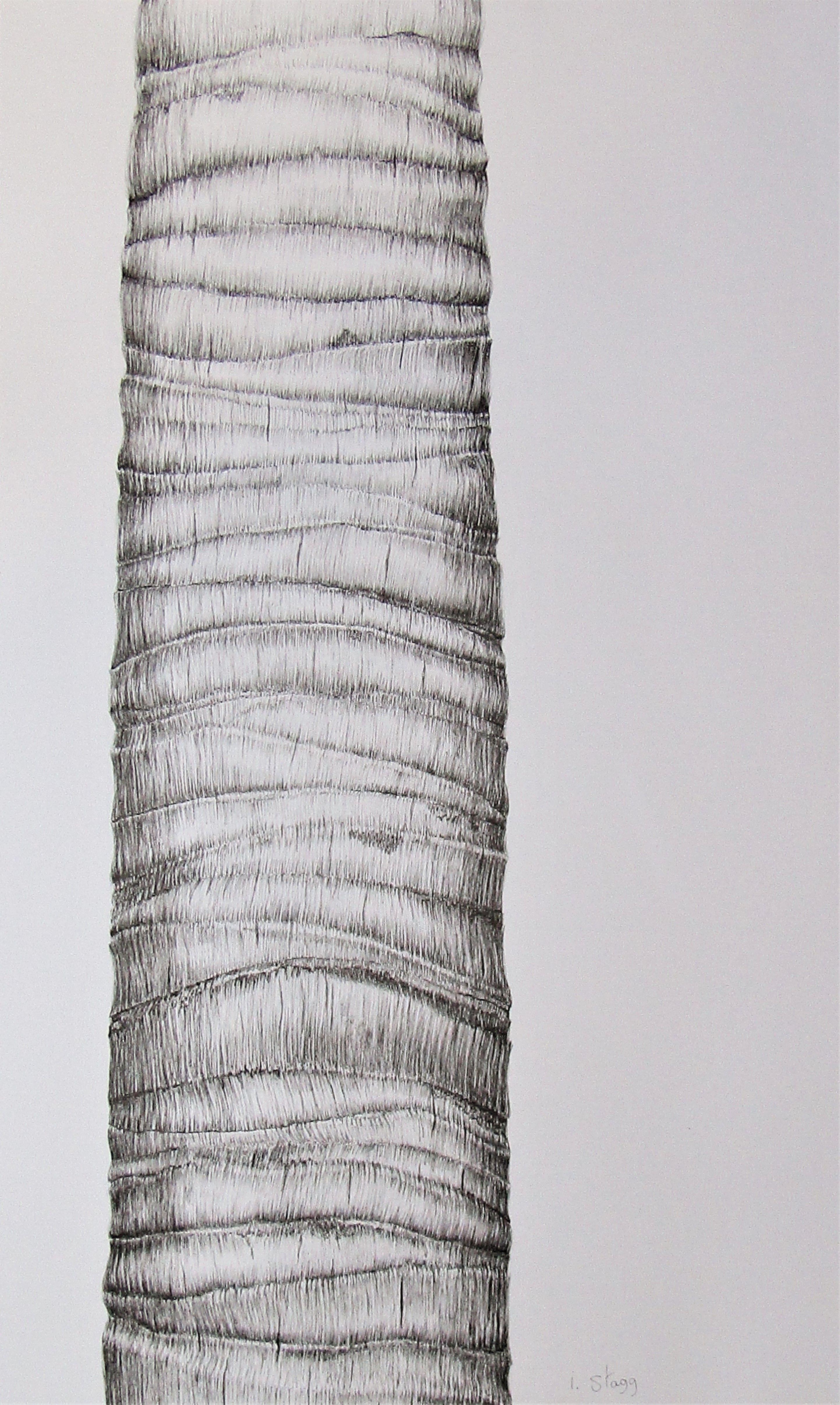 [+] Palm Tree Bark