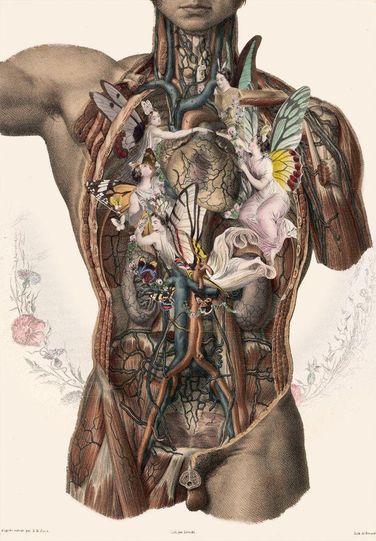 As colagens biológicas de FFO | Anatomía, Medicina y Cuerpo