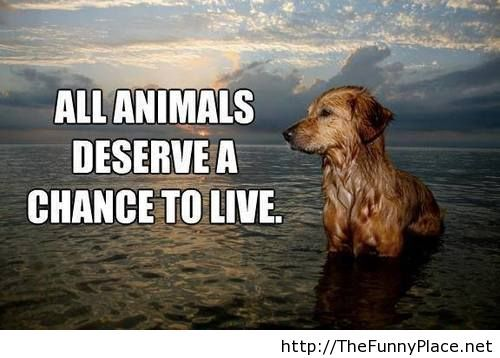 Pics For > Animal Quotes Tumblr animal quotes