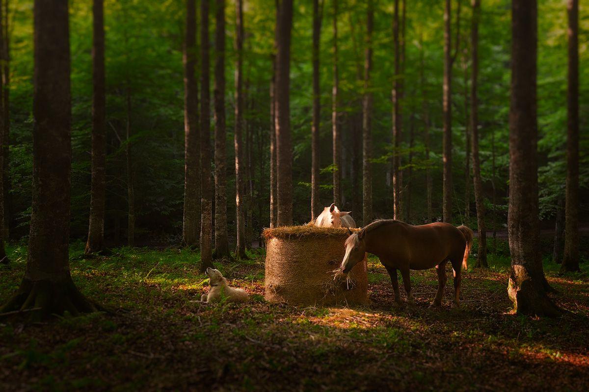 Pian del Cansiglio @ Andrea Livieri #montepizzoc #pizzoc #dolomiti #dolomites #bosco #foresta #woods #trees #alberi #canon #canon6d #6d #fullframe #tramonto #colori #natura #sole #falls #autunno #nuvole #veneto #italy #italia #landscape #paesaggio #photography #fotografia #landscapes #landscape #manfrotto #outdoorphotography #outdoor #horses #cavallo #cavalli