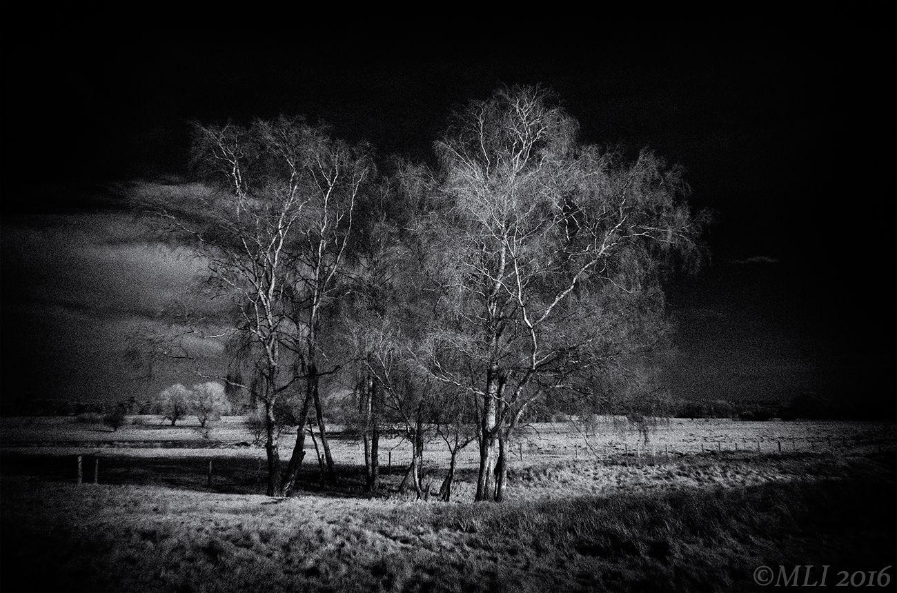 Ufficio Moderno Xela : A group of trees on cavenham heath suffolk taken with an ir