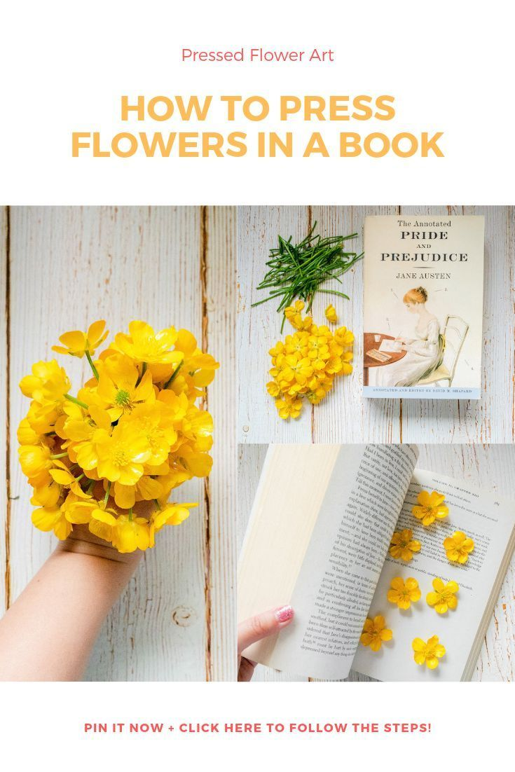 How to Press Flowers in a Book Pressed flowers diy