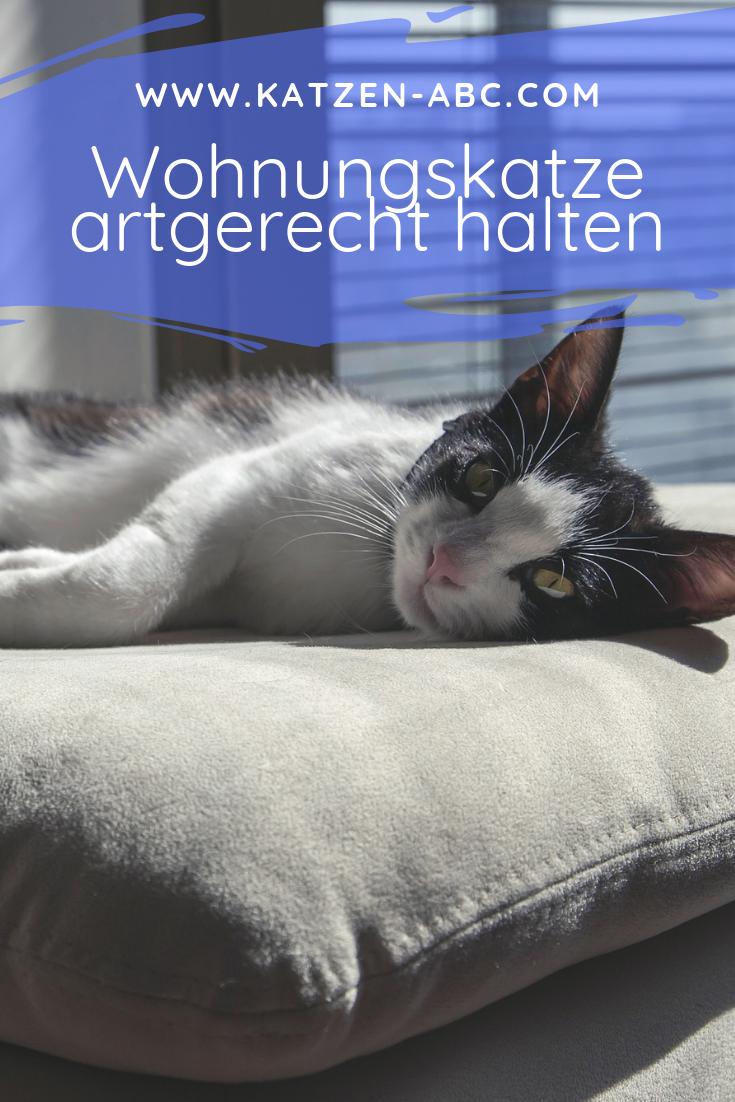 Wohnungskatze Artgerecht Halten Allgemeine Informationen In 2020 Katzen Wohnungskatzen Katzen Hacks