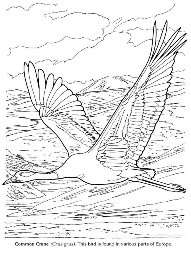 Free Bird Coloring Pages Pdf Free Coloring Sheets Bird Coloring Pages Bird Embroidery Pattern Bird Drawings
