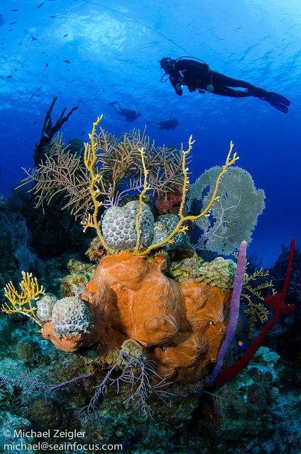 Colorful coralhead