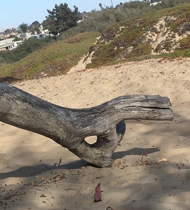This Piece Of Wood Is Doing Just Fine, And You? in 2020