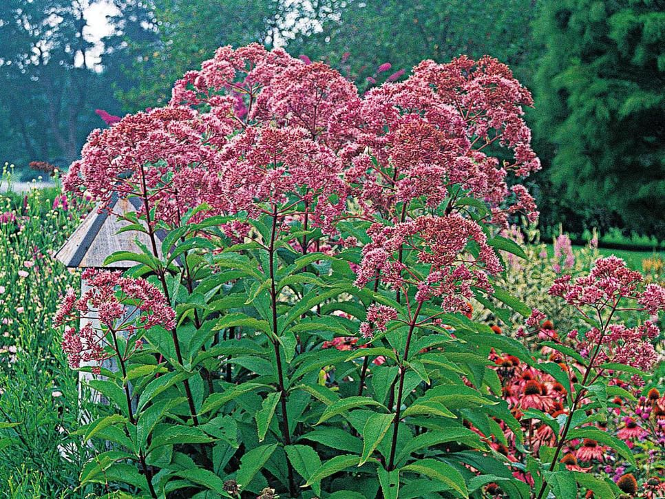 Perennial plants for fall perennial flowers perennials gardens a mainstay of the traditional flower garden perennials provide an abundance of bright beautiful mightylinksfo