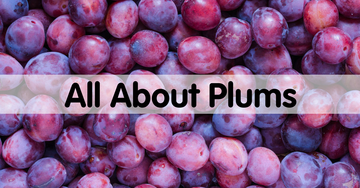 All About Plums How To Pick Prepare Store Produce For Kids Plum Cooking Tips Preparation