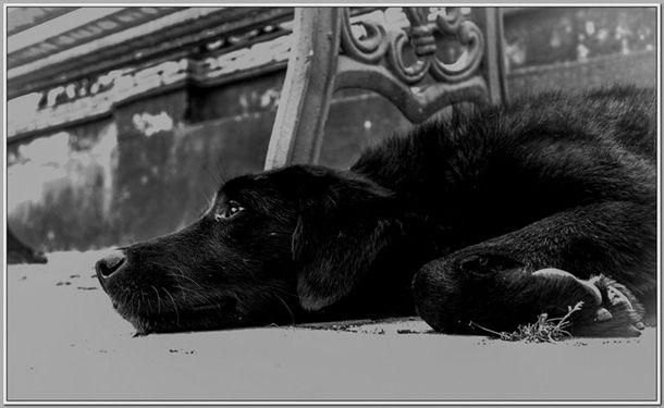 Dog Training Indianapolis Dog Training Whistles Hunting Robert