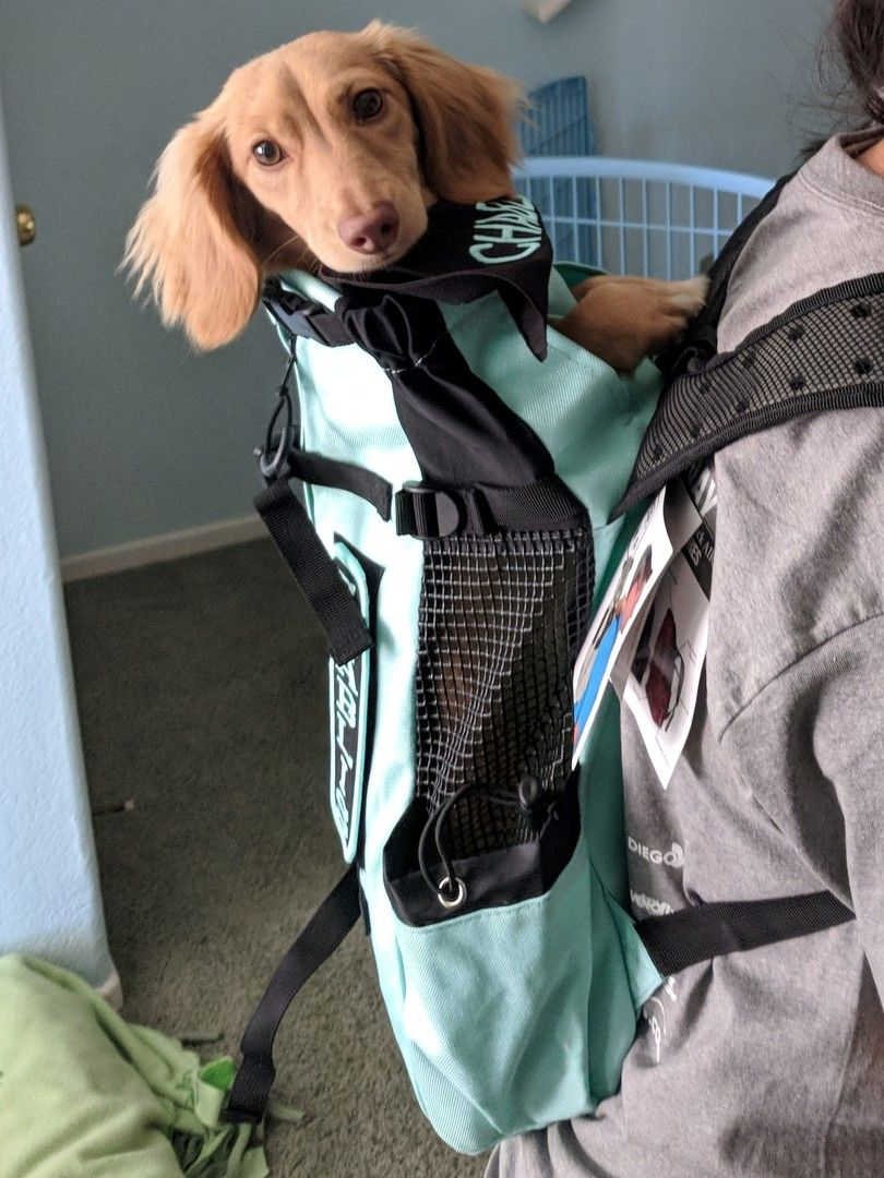 Dachshund Accessories For Dogs Dog Carrier Dog Backpack Weenie