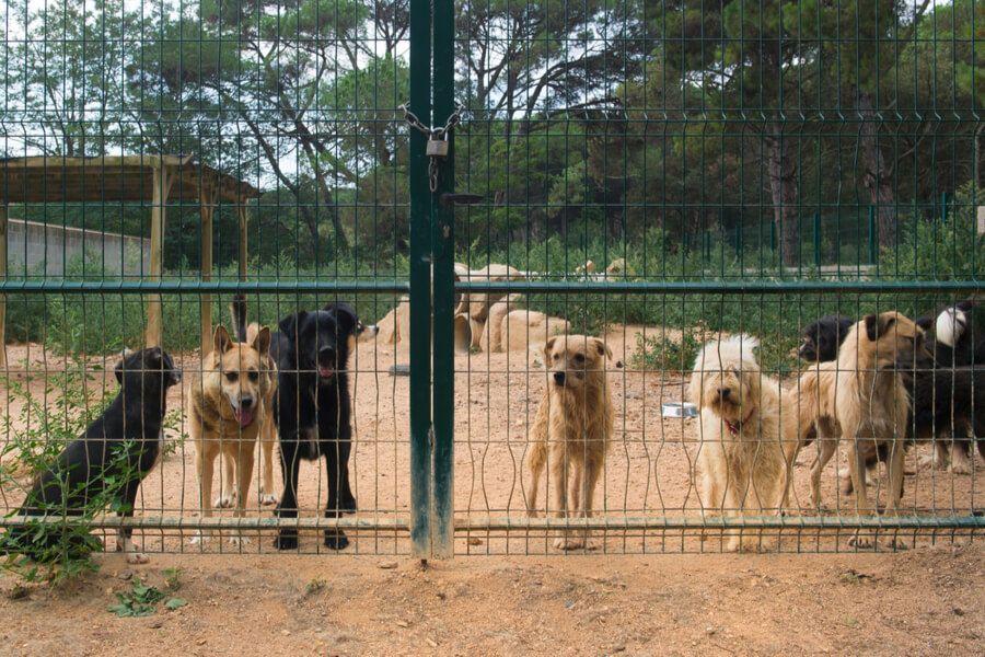 Hunde In Spanischem Tierheim Hunde Tierheim Tierheim Hunde