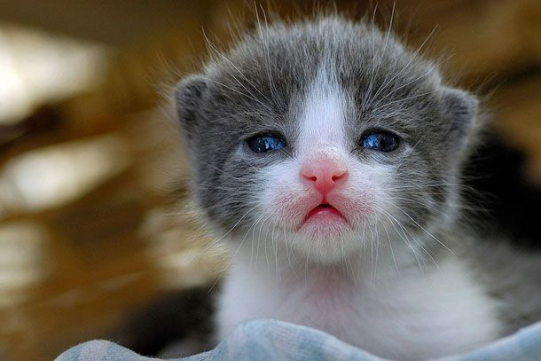 animales adorables (12)