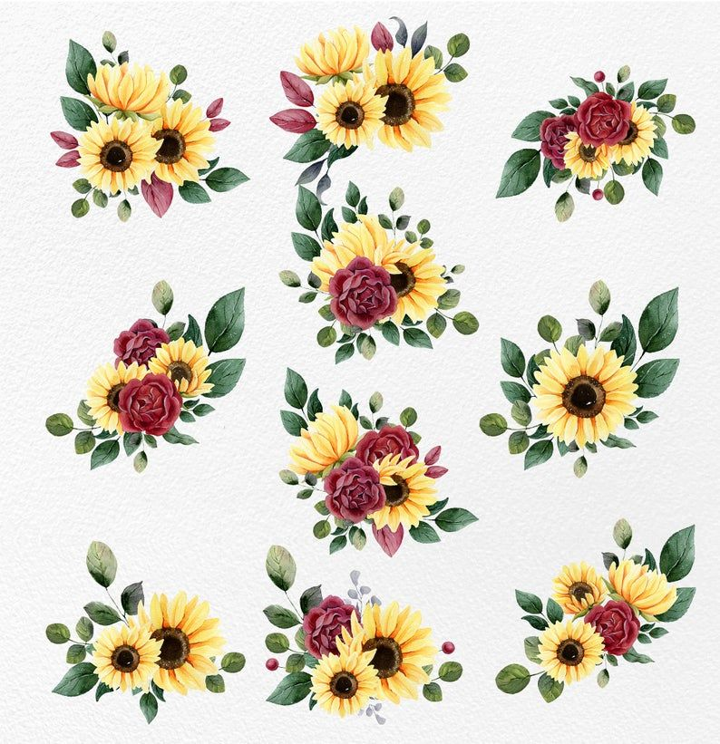 Sunflower PNG clipart, PNG red rose clipart. Water