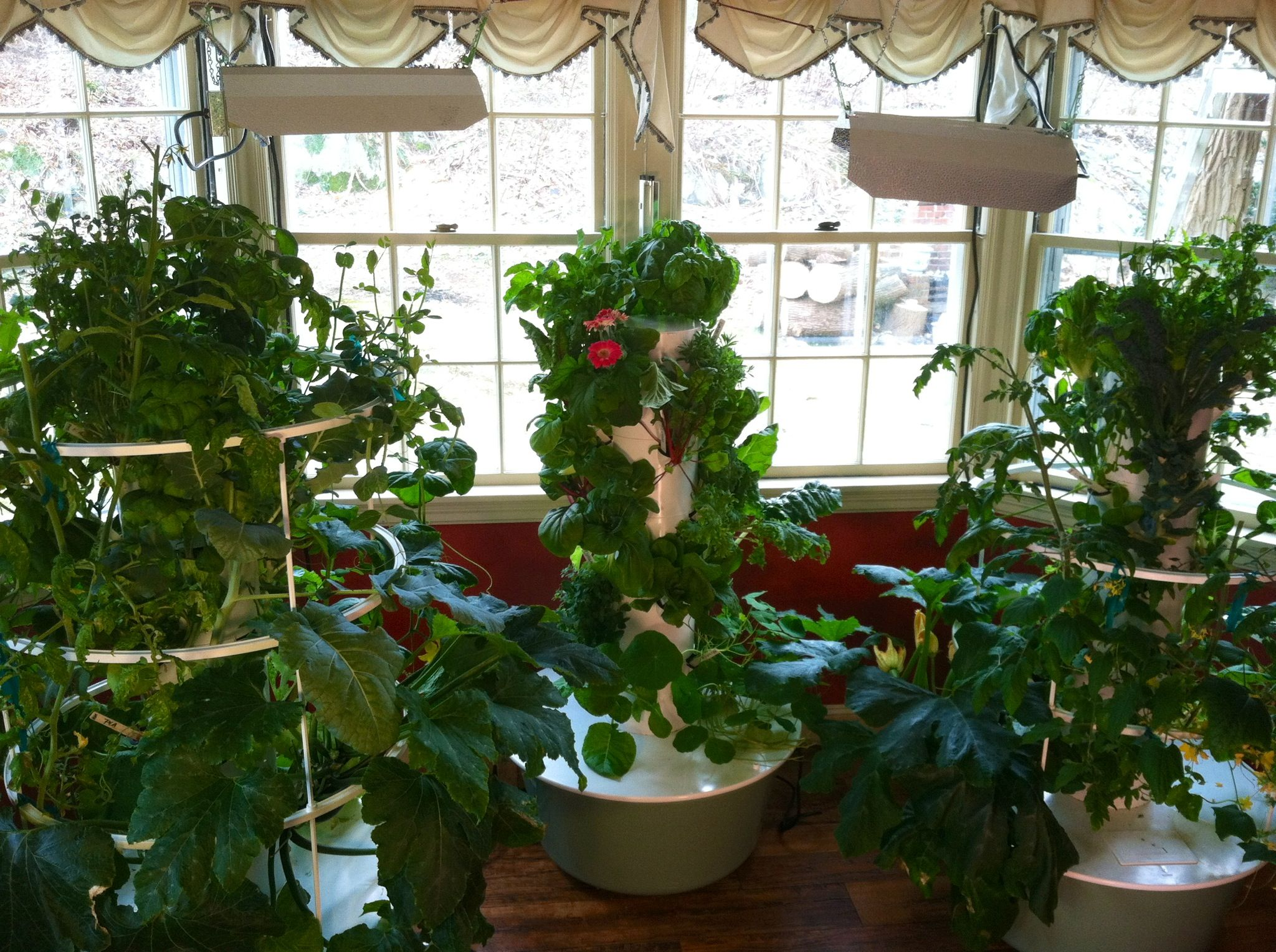 Indoor Gardening during a winter snowstorm. Click here for