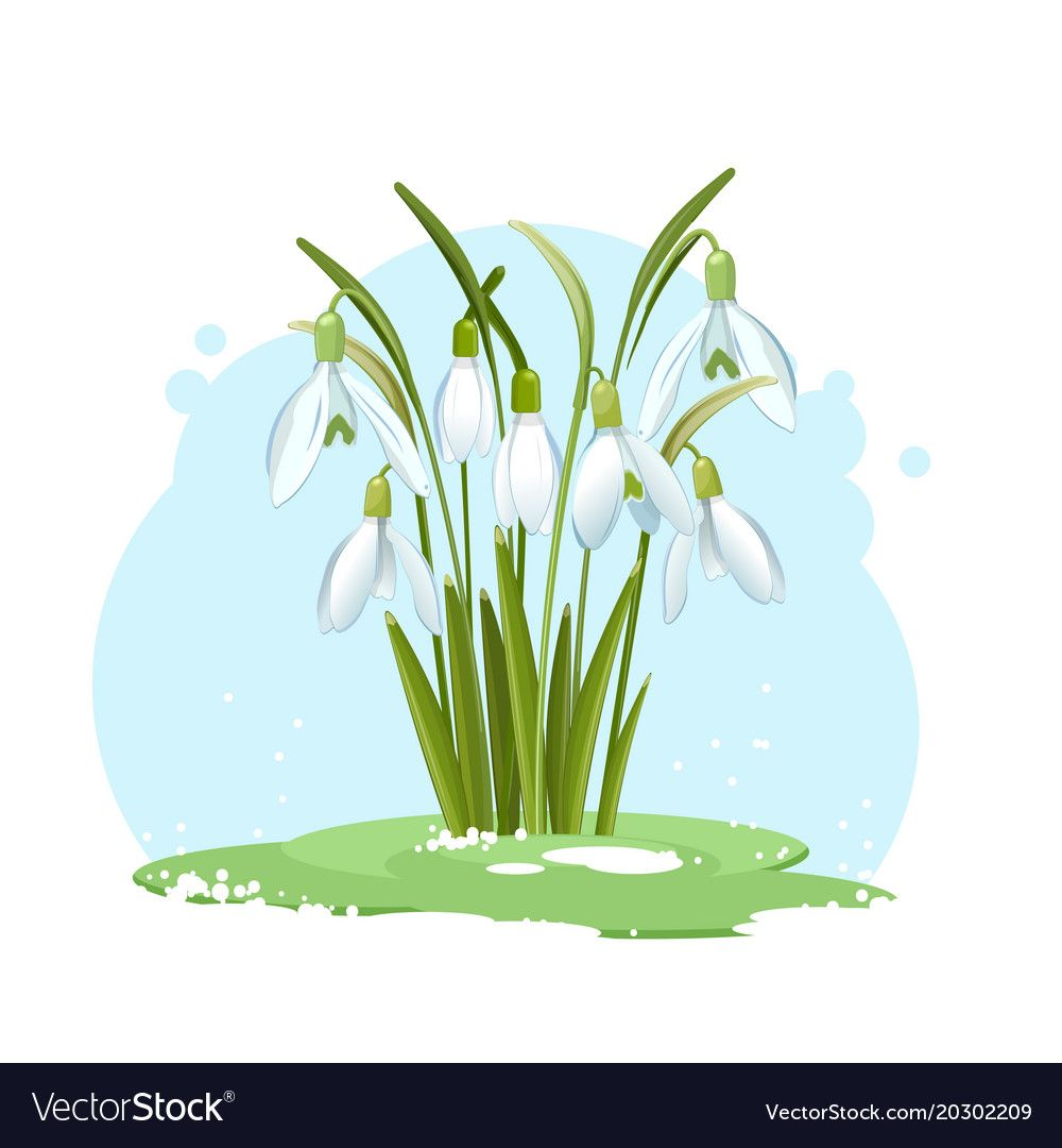 Snowdrop Flowers On A Blue Background Vector Image On Vectorstock In 2020 Blue Backgrounds Vector Illustration Vector