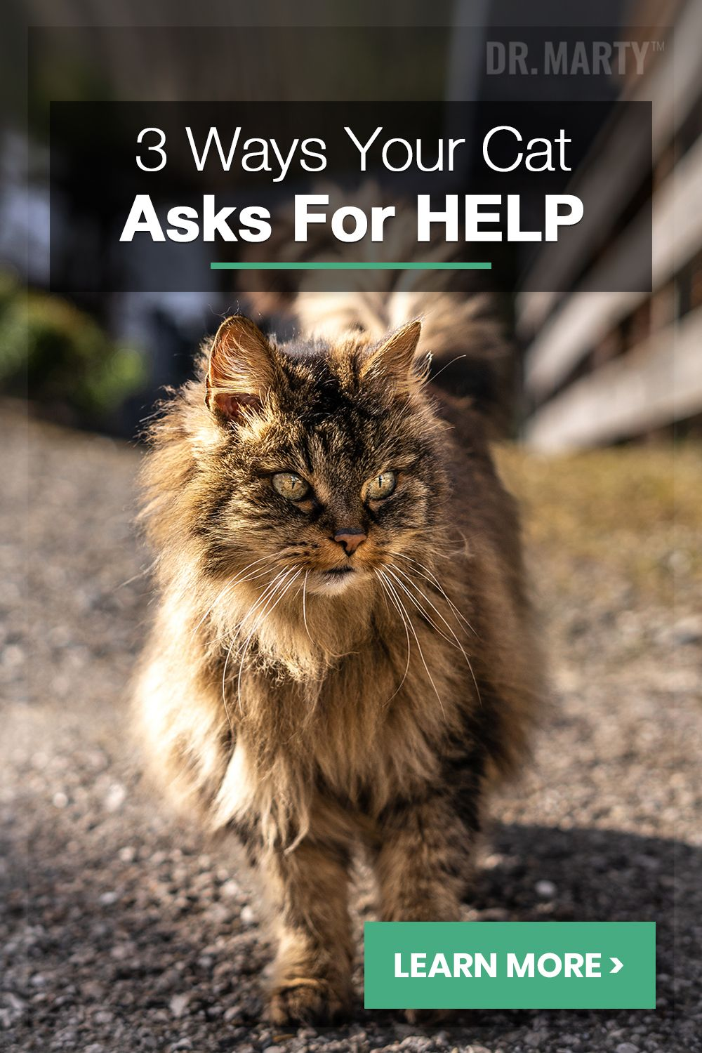 3 Ways Your Cat Asks For Help Cats Cute Cats And Kittens Cuddly Animals