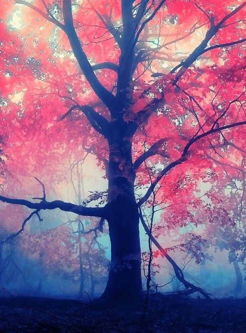 Image result for crimson leaf falling in mist""