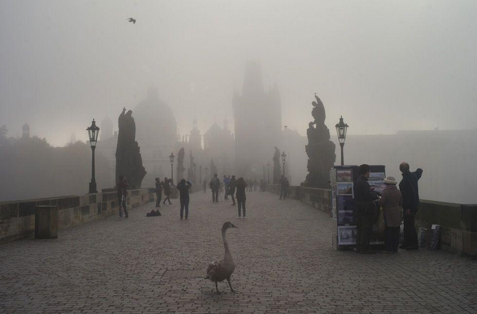 IlPost - Praga, Repubblica Ceca - Un cigno sul ponte Carlo a Praga (MICHAL CIZEK/AFP/Getty Images)