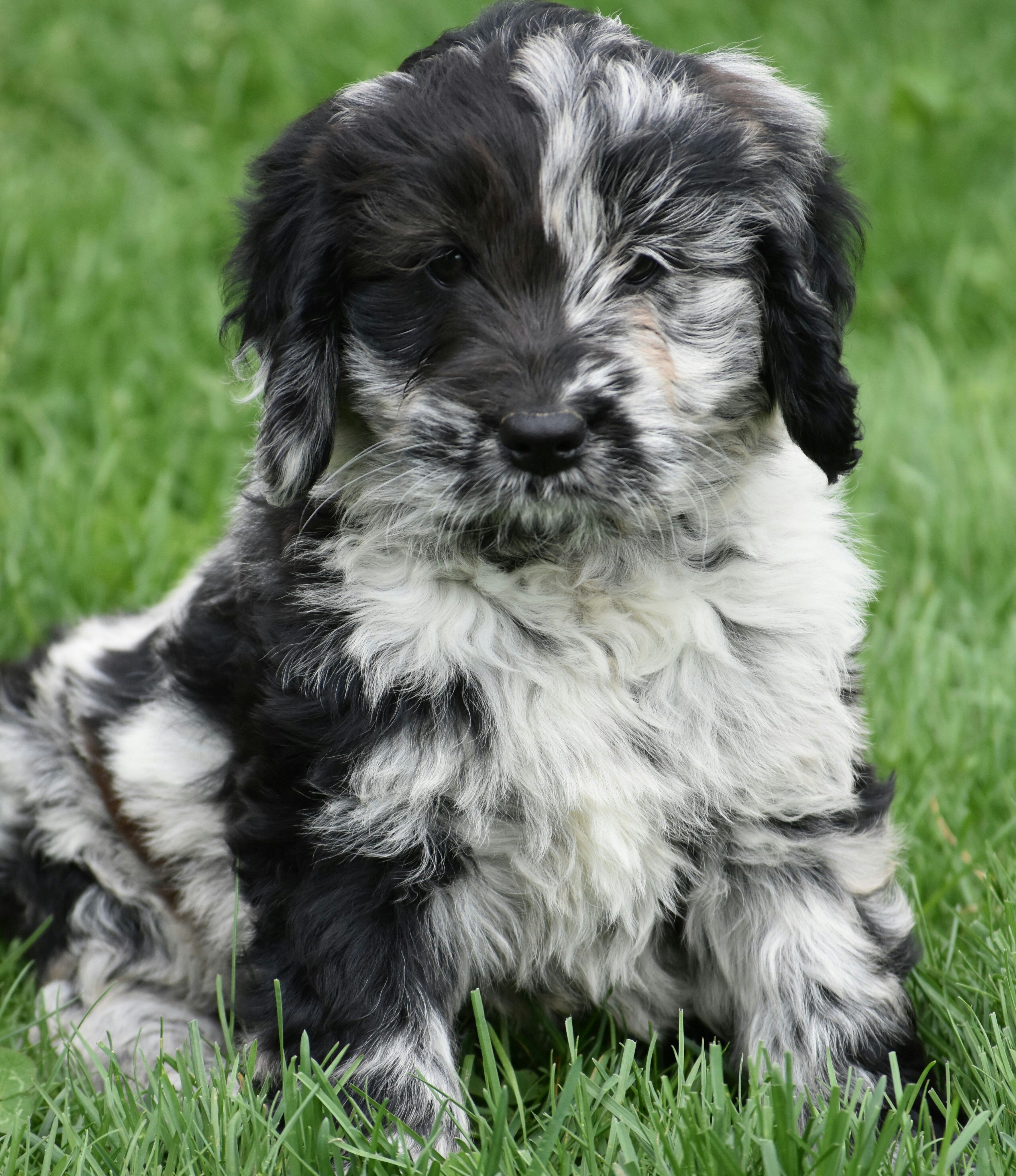 Puppies For Sale Cute Baby Animals Cute Animals Cute Animal Pictures
