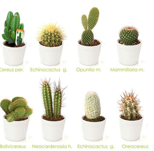 Este diadelamorylaamistad regala un cactus requieren for Cactus tipos y nombres