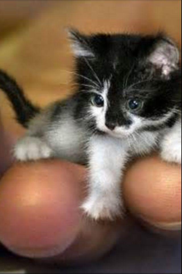 Tininiest kitten