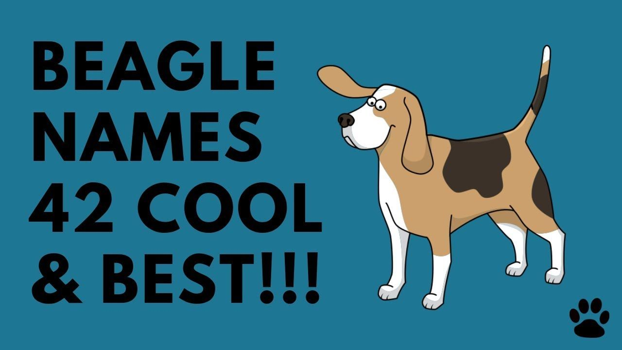 Beagle Names 200 Great Ideas For Naming Your Beagle Cute