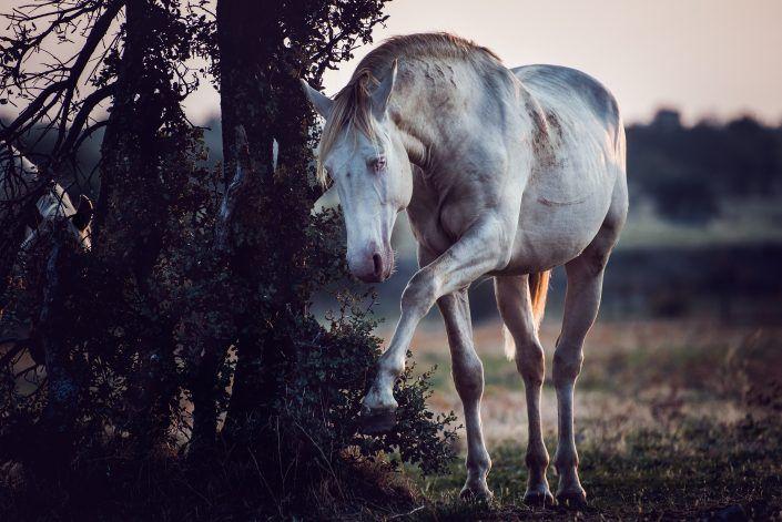 Fotos Pferde In Der Natur I Anna Ibelshauser Pferde Fotografie Pferde Pferdefotografie