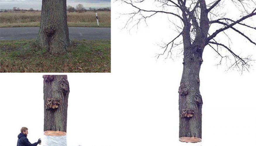Mind-Bending Hovering Tree Illusion by Daniel Siering and Mario Shu in Potsdam, Germany