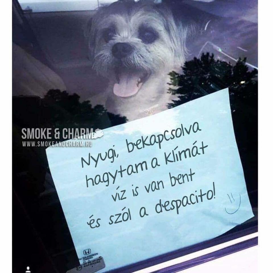 Kutyaélete van szegénynek!