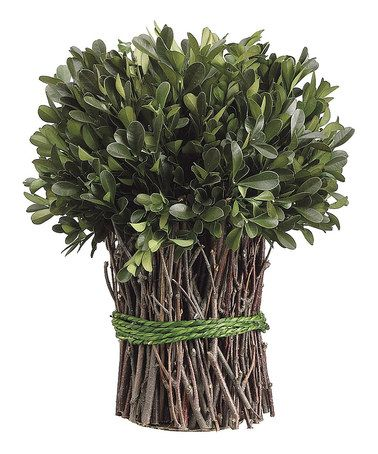 Loving this 10'' Preserved Boxwood Bundle on #zulily! #zulilyfinds