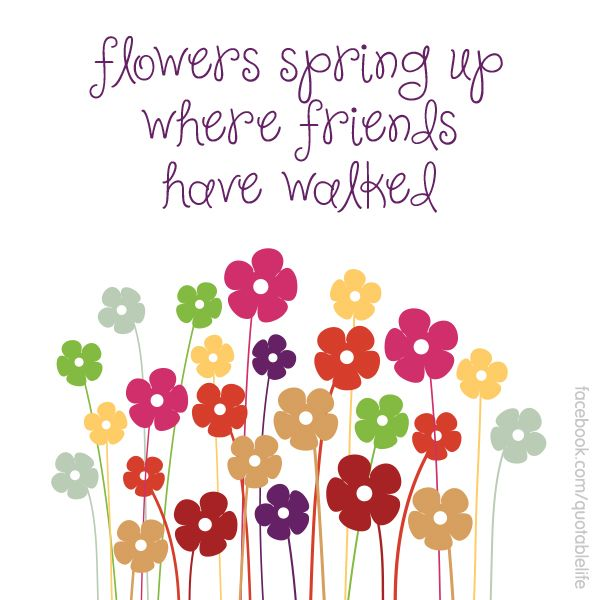 Beautiful Flowers Images With Friendship Quotes: Flowers Spring Up Where Friends Have Walked