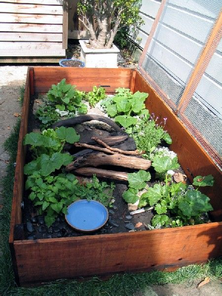 Box turtle habitat - Box Turtle Enclosures. Little Dude Needs A Home!!! Creativity