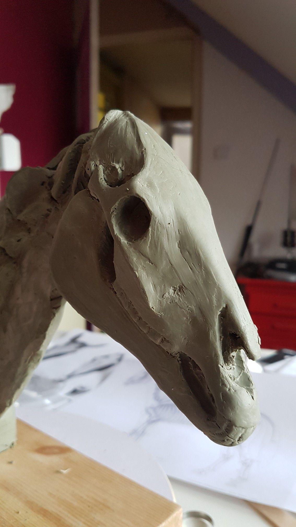 Horse skull wip   horses reference   Pinterest   Horse, Horse ...